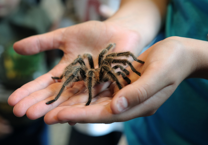 Exploring the Common Types of Phobias in Kids
